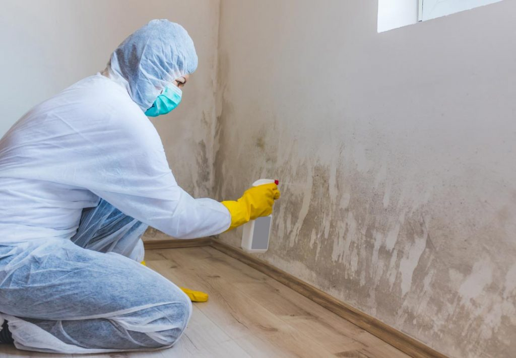 Mold Removal in Kendall FL